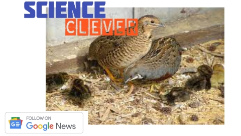 https://scienceclever.com/quail-farming-in-india-will-earn-more-at-less-cost-know/
