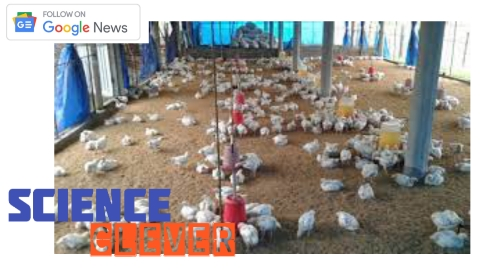 https://scienceclever.com/government-subsidy-for-poultry-farming-apply-like-this-know-all-the-things-related-to-it/