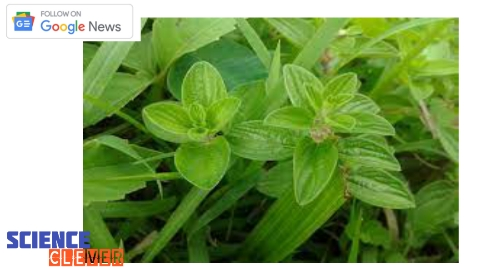 https://scienceclever.com/most-expensive-medicinal-herbs-in-india/